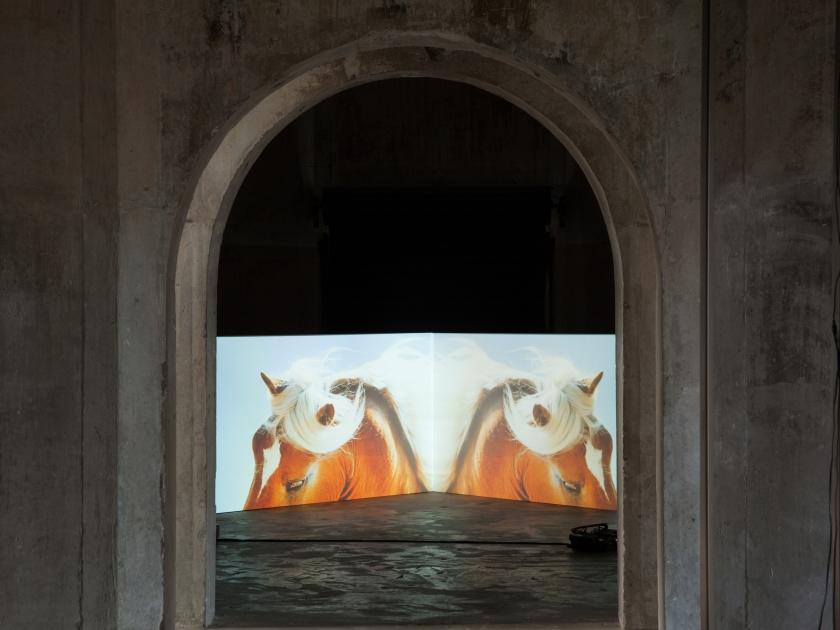 Nathan Pohio, The feral horses of Natasha von Braun, 2015, dual-channel projection, 5:20 min (installation view Silo 6, Auckland)